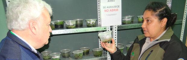 Crean banco de semillas y laboratorio para conservar flora nativa de Juan Fernández