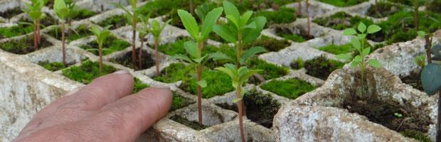 CONAF aporta 3500 plantas nativas y entrega asesoría para mantención de viveros comunitarios