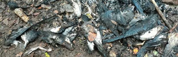 Por caza de 200 fardelas blancas CONAF presentará querella contra responsables
