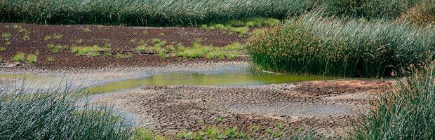 CONAF y especialistas trabajan para revertir pérdida de agua en humedal Rano Raraku
