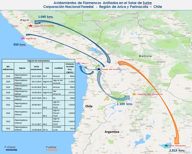 Este mapa actualmente registra avistamientos de flamencos nacidos en Surire.