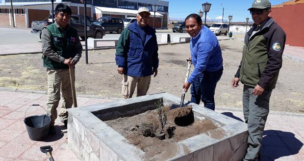 Para simbolizar este trabajo conjunto, el alcalde Alex Castillo Blas, junto al director de CONAF, Héctor Péñaranda y el equipo de profesionales que trabaja en la provincia de Parinacota, plantaron simbólicamente una queñoa en la plaza de Visviri.