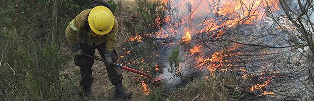 5 regiones del país presentan riesgo para la generación de incendios forestales
