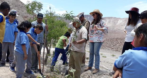 La primera jornada de forestación grupal de guacanos contó con el fuerte apoyo de los profesionales del Servicio País.