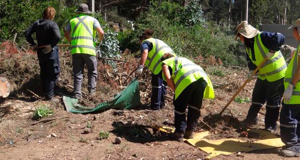 Operativo de desmalezado y retiro de desechos forestales.