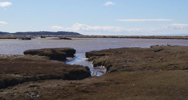 El objetivo del Monumento Natural es dar protección al hábitat y área de mayor concentración de parejas reproductivas de la especie en ambientes húmedos de la Patagonia Chilena.