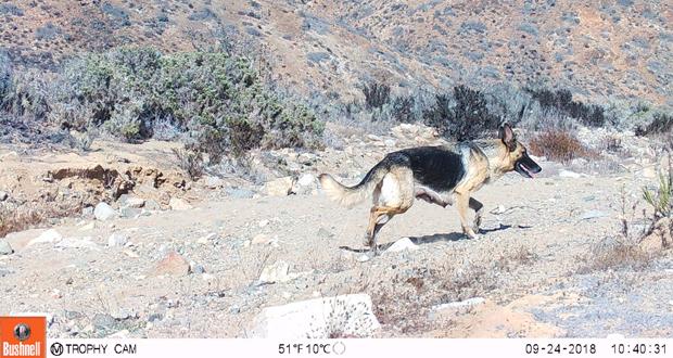 """No solo se obtuvo fotos de los llamados """"objetos de conservación"""" sino que además de amenazas directas a la biodiversidad como lo son las especies exóticas invasoras."""
