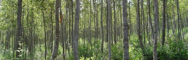 Primera convocatoria 2019 del concurso del fondo de incentivos de la ley del bosque nativo