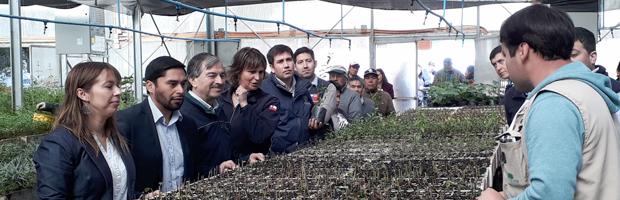 Restauración, producción no maderera y dendroenergía apoya INDAP y CONAF