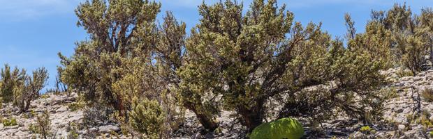 En Arica CONAF trabaja política forestal y su agenda de zonas áridas y semiáridas