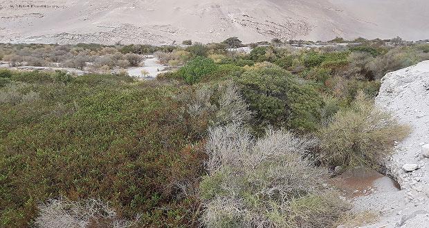 El nuevo monumento natural tiene una extensión de 10,8 hectáreas en el valle de Chaca de la Región de Arica y Parinacota