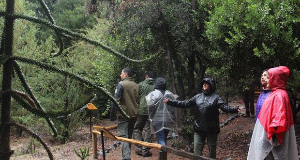El primer taller nacional de Baños de Bosque para guardaparques y profesionales de estas unidades se realizó en la Reserva Nacional Río Clarillo