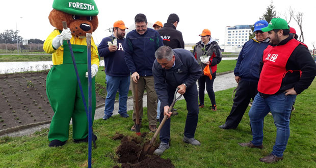 Los 420 árboles donados por CONAF correspondieron a especies de arrayán, canelo, olivillo, pitao y coihue.