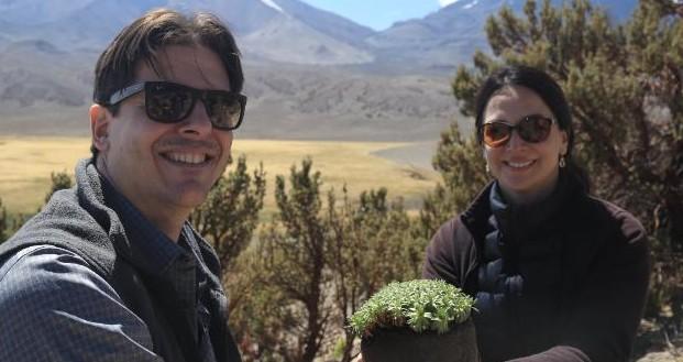 Durante la visita del Banco Mundial se realizó en Caquena junto a la comunidad aymara, una plantación de llaretas y queñoas.