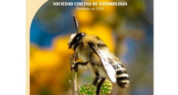 La hermosa imagen de este ejemplar macho captó la atención de los responsables de la Revista Chilena de Entomología.