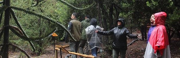 CONAF y Forest Theraphy Institute organizan primer Congreso Iberoamericano de Salud y Naturaleza