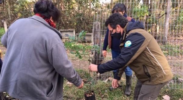 En total fueron plantados 40 árboles nativos, entre ellos ulmos, mañíos, canelos y arrayanes, diez por especie.