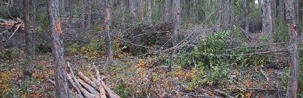 CONAF anuncia importantes incorporaciones a la Ley de Bosque Nativo
