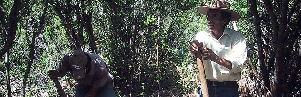Consejo de Política Forestal trabaja para fortalecer al sector y aportar a la reactivación del país