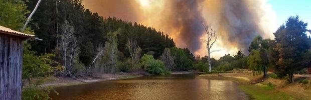 'Ecología del paisaje: ¿Qué sucede después de un incendio?'