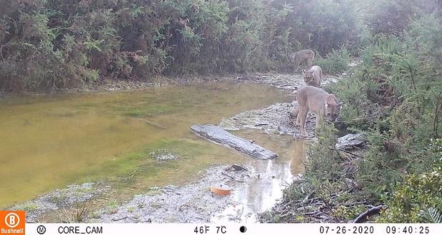 Cabe señalar que el sistema de observación contempla un total de 95 puntos de monitoreo en la región, 35 cámaras en el Parque Nacional Alerce Costero, 30 en el Parque Nacional Villarrica sur y 30 en la Reserva Nacional Mocho Choshuenco.