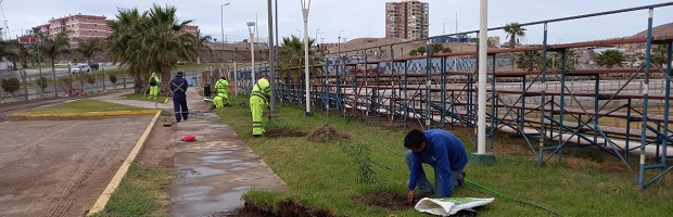 Arborizan calles y canchas externas del Estadio Carlos Dittborn de Arica