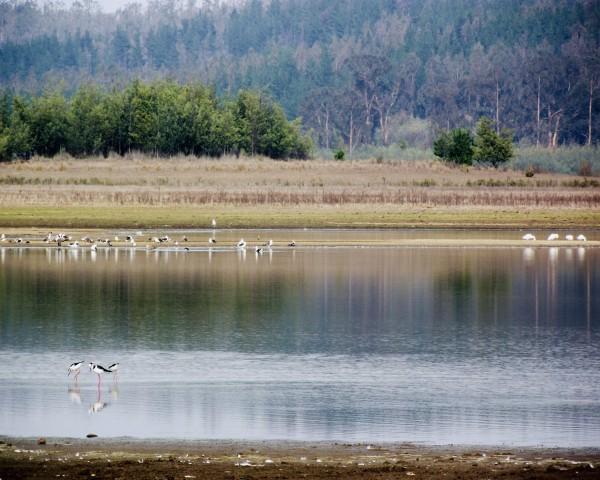 Reserva Nacional Lago Peñuelas.