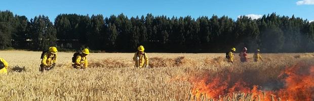 """Director de CONAF Los Ríos y menor ocurrencia de incendios forestales en la región: """"La prevención y el autocuidado han sido fundamentales"""""""