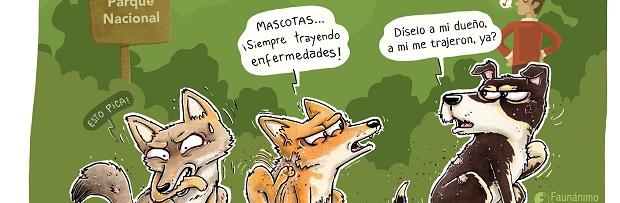 CONAF llama a celebrar Día de la Vida Silvestre con tenencia responsable de mascotas
