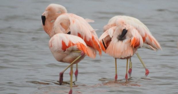 Quien captó las imágenes fue el biólogo Jhonson Vizcarra perteneciente a la Administración Técnica Forestal y de Fauna Silvestre de Tacna y Moquegua.
