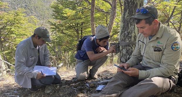 La instalación de 17 cámaras trampa y el registro de avistamientos que administra CONAF, ha permitido evidenciar que los pumas presentan variados comportamientos en las áreas de uso público.