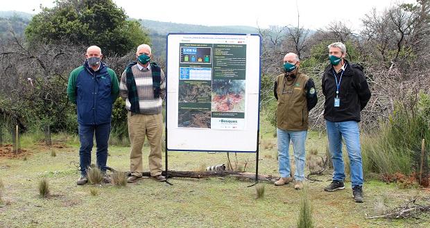 Sobre un total de 3.498 hectáreas distribuidas entre los predios Belco, La Estrella y Santa Dolores, de la provincia de Cauquenes, +Bosques comenzó sus acciones de restauración de suelos degradados y forestación con especies nativas y endémicas.